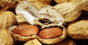Peanut prices rising due to depressed worldwide crops and higher Aflatoxin levels.